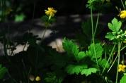 여름 한가운데서...여름의 아름다운  초록과 노랑